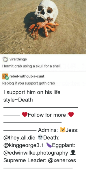 viralthings-hermit-crab-using-a-skull-for-a-shell-rebel-without-a-cunt-24484632.png